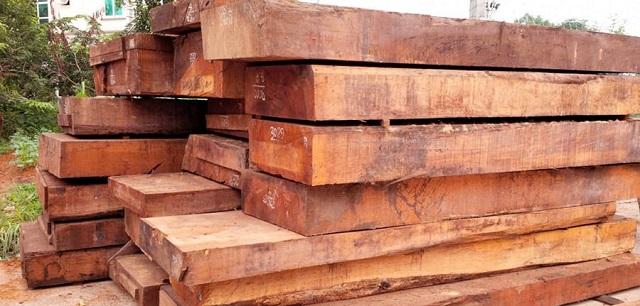 Đặc điểm gỗ gụ ra sao?
